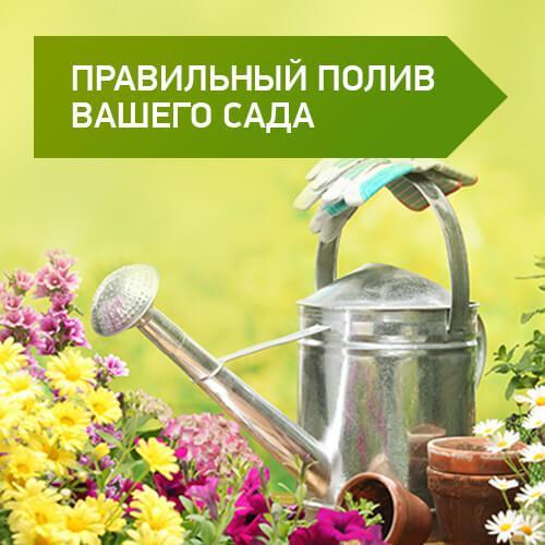 Правильный полив Вашего сада.